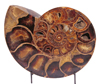 One half of a pair of Ammonites from Madagascar.